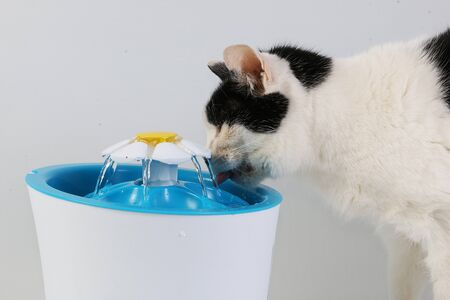 Black and white cat drinks fresh water from an electric drinking fountain
