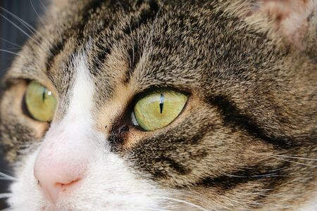 Extreme close up of cats eyes