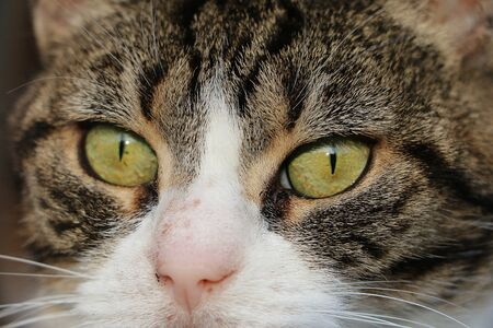Extreme close up of cats eyes Stok Fotoğraf - 137923243