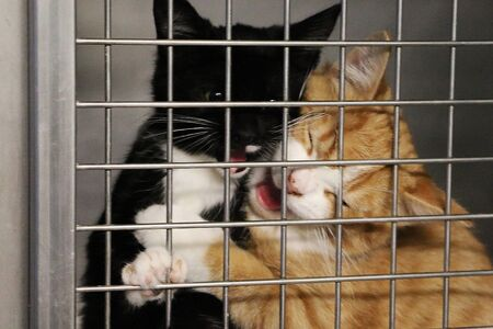 Two funny crying kittens behind the fence in a cage