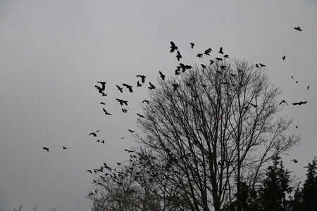 Flock of birds flies over a tree in the dark