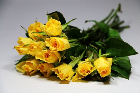 Bouquet of yellow roses are lying in the white studio
