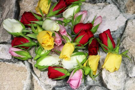 Beautiful colorful heads of different roses are lying on a stony wall