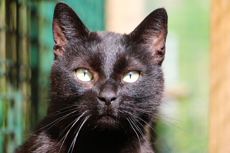 Beautiful black cat head portrait in the garden