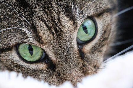 Exteeme close up of beautiful green eyes from a cat Stok Fotoğraf