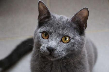 beautiful small gray kitten head portrait
