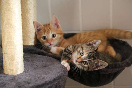 two small funny kittens lying and playing on the scratching post