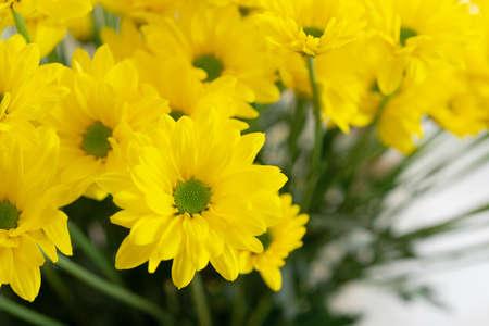 Beautiful yellow flowers close up.