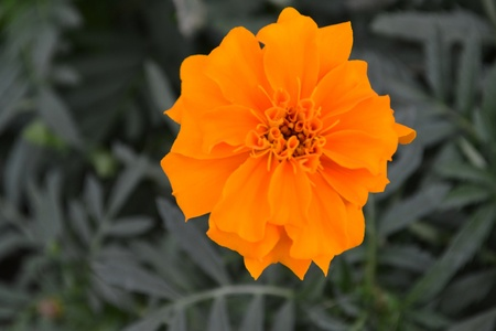 and distinctive: Very distinctive yellow flower