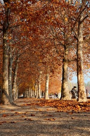 banc de parc: Automne promenade au bord du lac Balaton, en Hongrie (Balatonfred)
