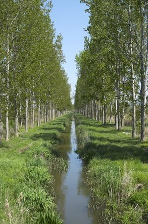 Creek between two avenues near Szigliget at Lake Balaton,Hungary