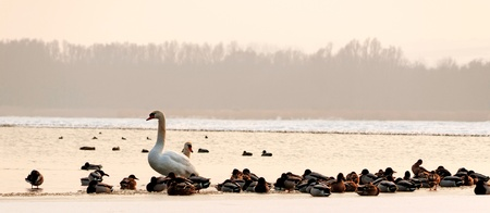 Many birds on the frozen lake in winter time Stock Photo - 12209676