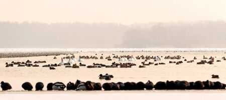 Many birds on the frozen lake in winter time photo