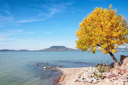 Autumn tree at Lake Balaton,Hungary