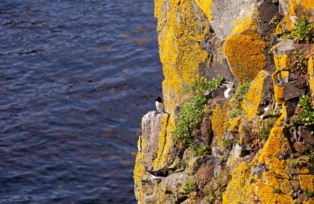 Birds on the cliff at the Atlantic Ocean Stock Photo