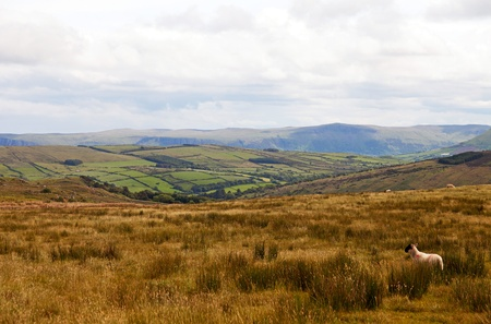 Meadow in Ireland photo