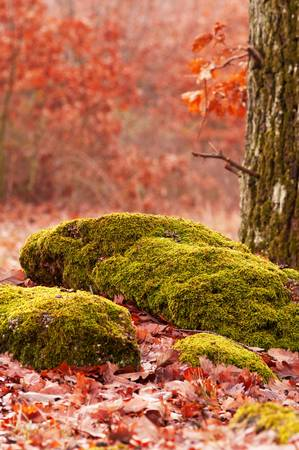 Forest scene in autumn photo