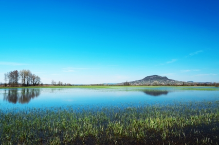 hydrophyte: Flooded meadow at Lake Balaton,Hungary