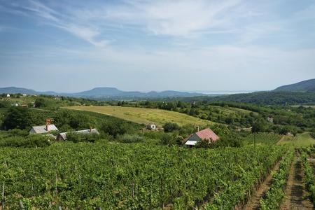 balaton: Vineyard landscape at Lake Balaton, Hungary