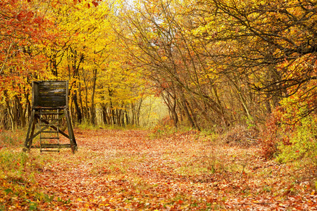 Beautiful autumn forest in November, Hungary