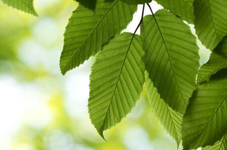 New green leaves in springtime Stock fotó