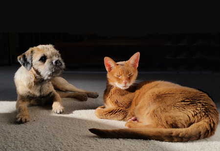 coexist: Dog and cat together