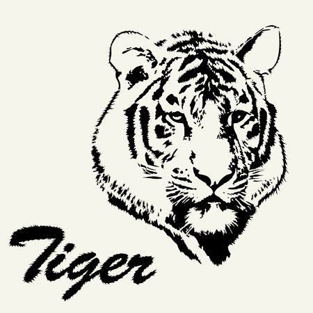 black and white panther: Tiger head hand drawn. Tiger sketch isolated background. Stylized haired inscription Tiger.