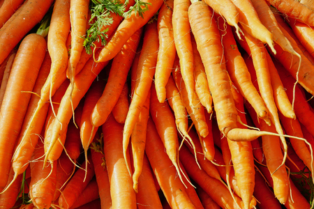 Bright Orange Bunch of Healthy Carrots