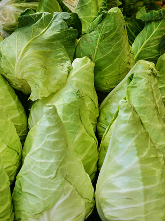 Bunch of Healthy Cabbages - Close Up Banco de Imagens