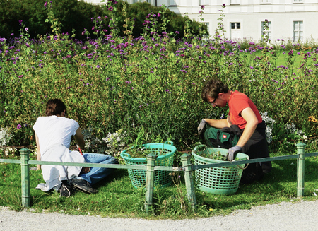 Man and women gardening in beautiful flower bed - Nymphenburg Palace, Munich - Aug 2016