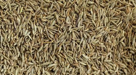 dried spice: portarretrato de picante seca - semillas de comino.