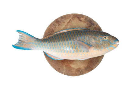 Parrot fish put on the chopping block