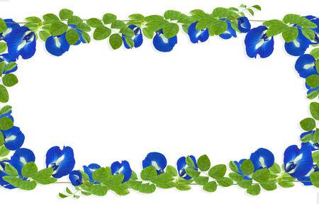 Leaf frame on white background photo