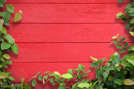 Fresh spring and leaf plant over wood background Stock fotó