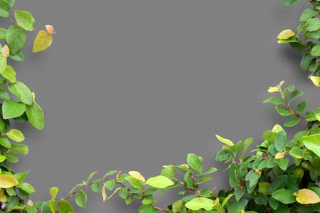 green frame: leaf frame  on wall background