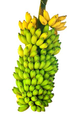 Banana fruits isolated on white Zdjęcie Seryjne