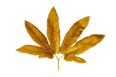 Golden painted  leaves creative  on white background Stock fotó