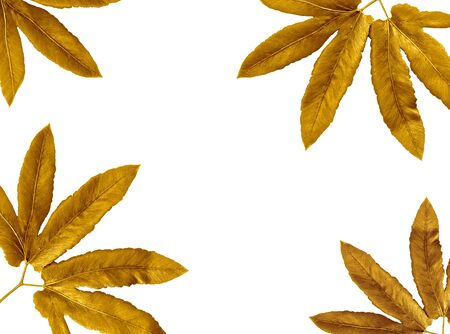 Golden painted leaves creative on white background .