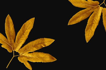 Golden painted leaves creative on black background .