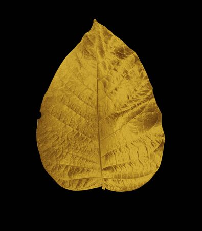 Golden painted  leaves creative  on dark black background isolated.