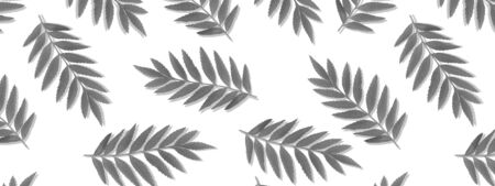 leaves pattern on white background. Flat lay.