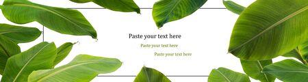 green banana leaf  border on white background Stock fotó