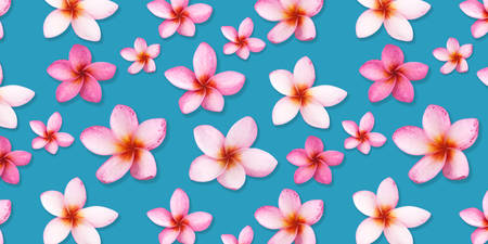 Pattern from beautiful pink flowers frangipani plumeria alba on blue background.