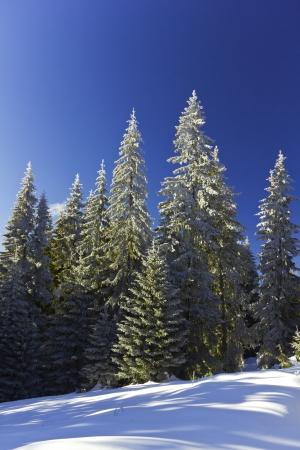 Winter landscape in a mountain
