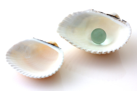 Shells with pearl isolated on white photo