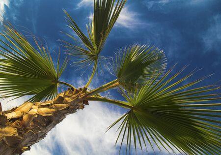 Palm tree leafs on blue sky Stock Photo