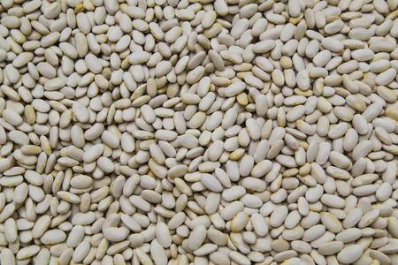white beans: White beans background
