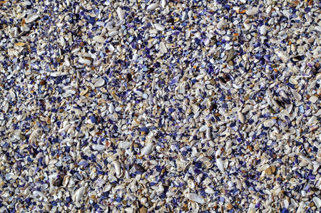 clam: Colorful clam shells background