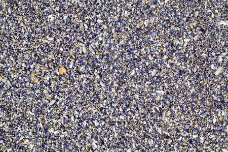 almeja: conchas de almejas de colores de fondo