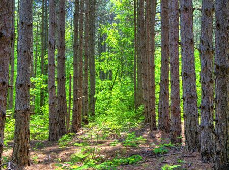 Beautiful landscape in fresh green forest